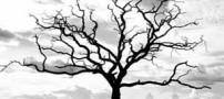 داستان جذاب و خواندنی، دعای پیامبر برای درخت!