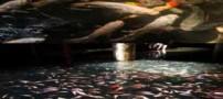 دریاچه دیدنی و مصنوعی ماهیان کوی در مرکز تجاری