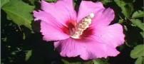 گیاه مناسب برای کاهش قند خون