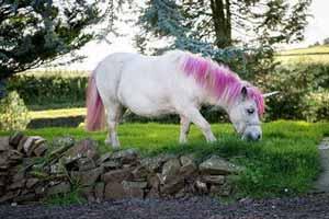 زیباترین اسب هایلات شده در دنیا (عکس)