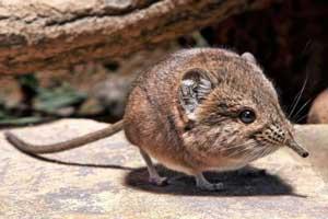 عجیب ترین جانور کشف شده در کویر نامیبیا  (عکس)