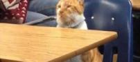 باورنکردنی اما واقعی از گربه ای که دانشجو است (عکس)