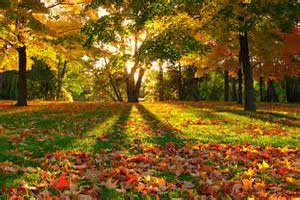 چرا در پاییز برگ ها تغییر رنگ می دهند