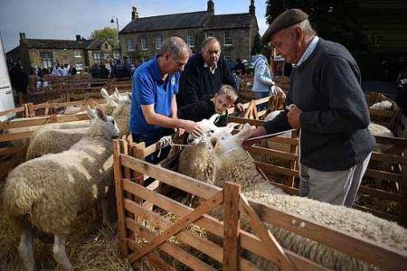 مسابقه جذاب و دیدنی گوسفند شایسته سال!