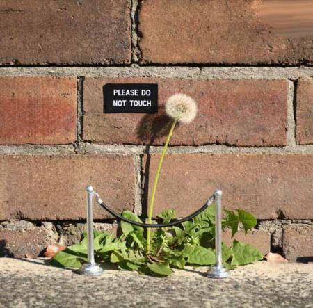 علائم خیابانی بسیار جالب در سیدنی (عکس)