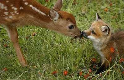 عکس های حیرت انگیز از عید دیدنی حیوانات !