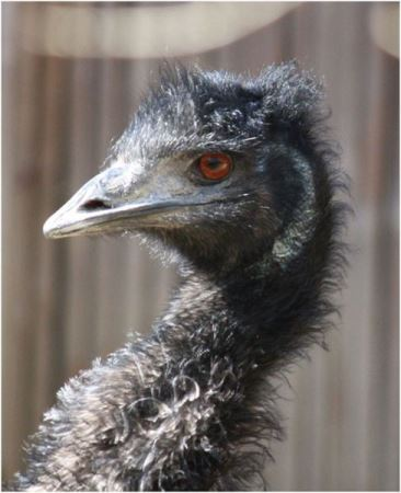 عجیب و ترسناک ترین حیوانات باورنکردنی