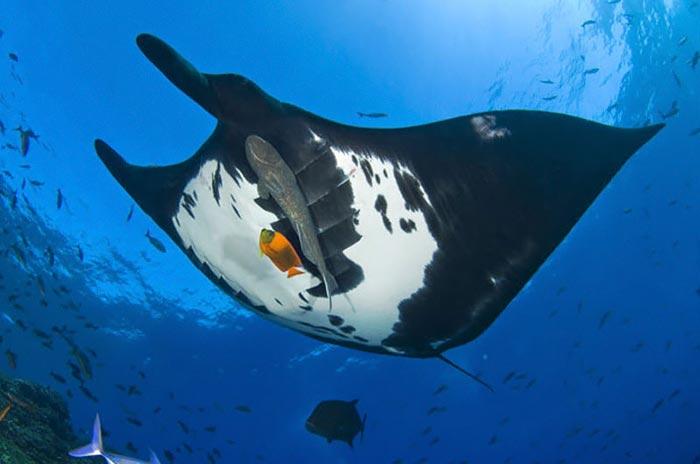 عکس های زیبا و دیدنی از عجایب اعماق دریاها