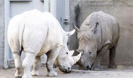 عکس حیوانات شگفت انگیز