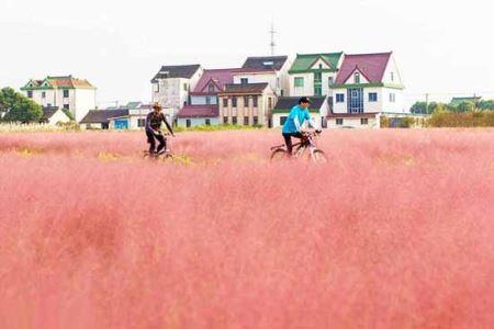 عکس های قابل توجه علف های صورتی در چین!