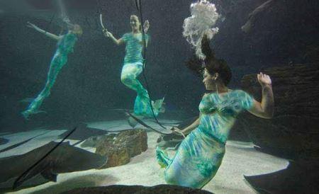 رقص واقعی پری های دریایی همه را بهت زده کرد (عکس)