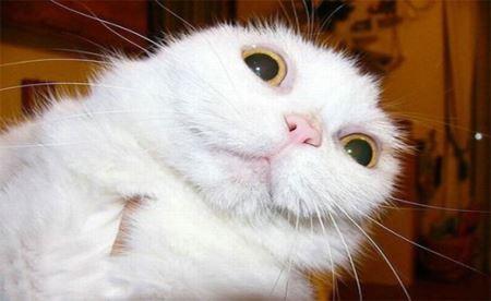 خنده دارترین عکس ها از چهره حیوانات متعجب !