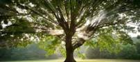داستان آموزنده درخت بنی اسرائیل