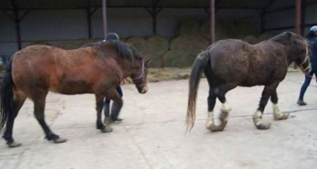 پاهای عجیب اسبِ یک مرد بی رحم ! + عکس