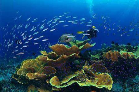 عکس های بی نظیر موجوات زیر آبی