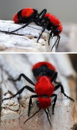 عکس های حیرت انگیز از نادرترین حیوانات رنگی !