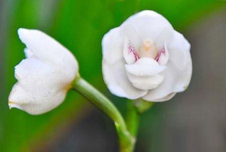 عکس هایی از گل های شگفت انگیز با چهره های عجیب