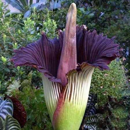 عکس های چندش آور از بدترین گل های جهان!