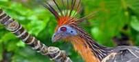 5 پرنده ای که گینسی شدند ! + عکس