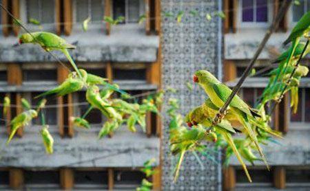 خانه ای حیرت آور با 4 هزار طوطی (عکس)
