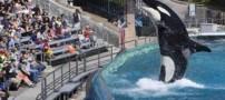 رقص دیدنی نهنگ قاتل ! + عکس
