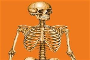 آشنایی با تمامی استخوان های بدن انسان