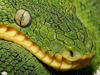 عکسهای دیدنی و زیبا از ترکیب رنگ ها در بدن جانوران