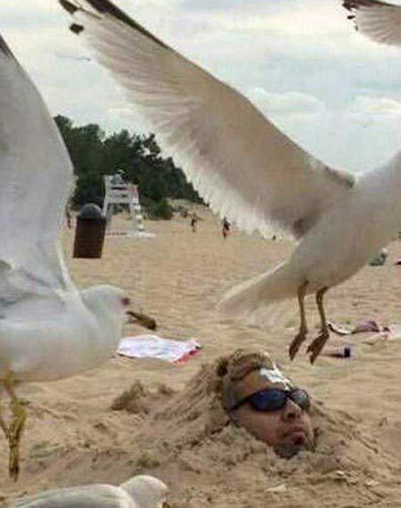 عکس های خنده دار،طنز و بامزه جدید شبکه های اجتماعی