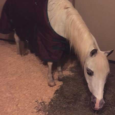 لیدی گاگا هدیه کریسمس را درب خانه دریافت کرد (عکس)