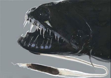 ترسناک ترین هیولاهای دنیا در دریاها و اقیانوس ها (عکس)