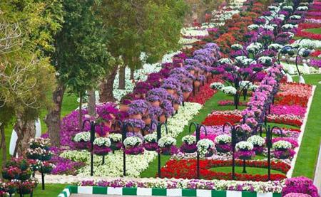 عکسهایی دیدنی از  پارکی سرسبز و هزار رنگ در امارات