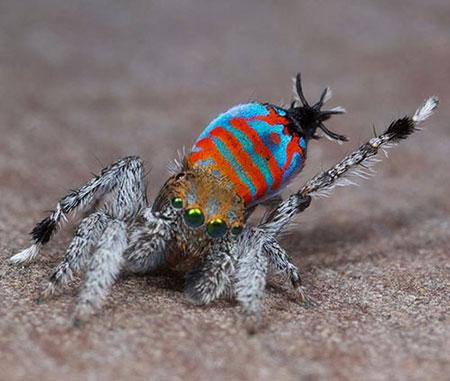 عجیبترین حیوانات کشف شده سال 2015 (عکس)