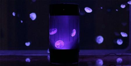 عروس دریایی که مانند چراغ خواب نور تولید می کند (عکس)