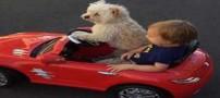 سگی که راننده شخصی کودک 4 ساله است (عکس)