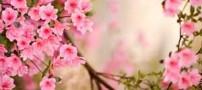 شعر زیبای شکوفه های هلو از حسین منزوی