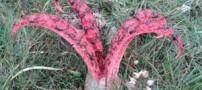 گیاهی جهنمی و بسیار عجیب با ظاهری شیطانی (عکس)