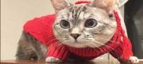 حیواناتی که در شبکه های اجتماعی معروف و ستاره شدند (عکس)