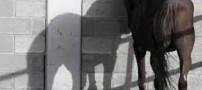 آمار وحشتناک تجاوز جنسی به اسب در سوئیس (عکس)