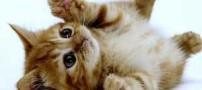 گربه ی انتحاری داعشی ها را ببینید ! (عکس)