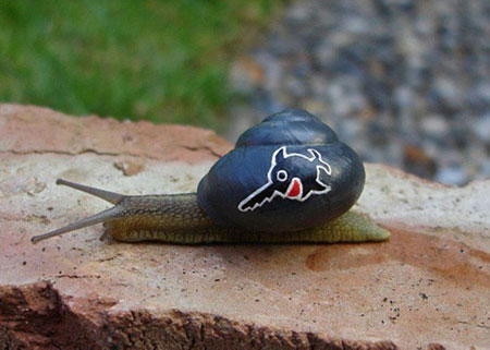 عکسهای دیدنی از نقاشی روی صدف حلزون زنده