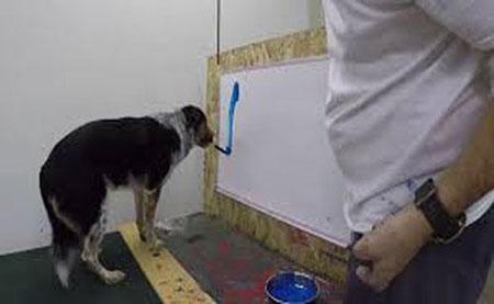 سگ باهوشی که با قلم مویی اسمش را می نویسد (عکس)