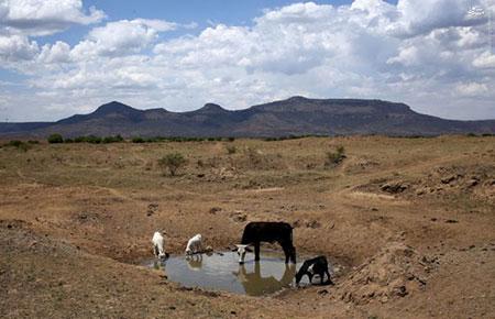 پدیده النینو باعث گرسنگی 14 میلیون آفریقایی شد