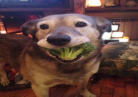 عکس های خنده دار و بامزه از غذا خوردن حیوانات