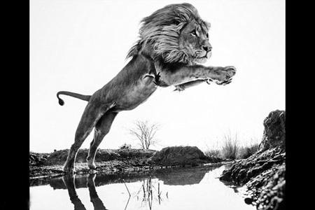 عکس های سیاه و سفید زیبا از حیوانات جنگل
