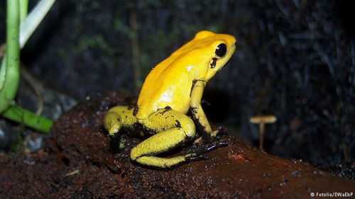 اطلاعاتی درباره حیوانات زهردار و خطرناک جهان (عکس)