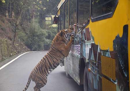 ماشین سواری هیجان انگیز در باغ وحش با حیوانات درنده