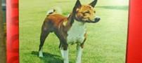 37 سال زندان بخاطر توهین به سگ ملکه (عکس)