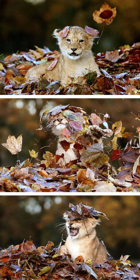 عکس های دیدنی و جالب از بازیگوشی حیوانات در طبیعت