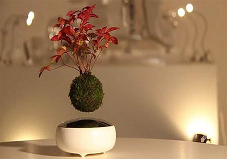 درختچه های کوچک معلق در هوا (عکس)