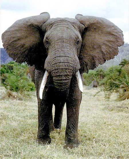 آشنایی با کشنده ترین حیوانات ترسناک در جهان (عکس)